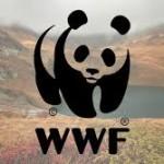 Стаж в екипа на WWF